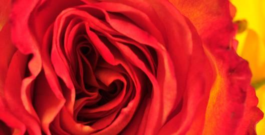 header_valentine